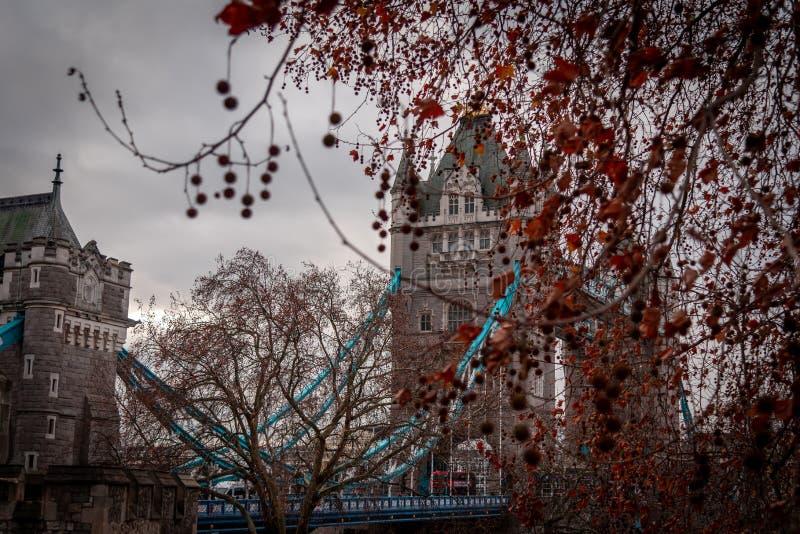 LONDRES, INGLATERRA, o 10 de dezembro de 2018: Ponte da torre em Londres, o Reino Unido Visto atrás das árvores brancas da torre  fotografia de stock royalty free