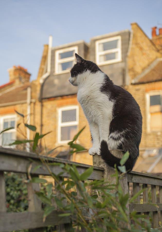 Londres, Inglaterra - un gato blanco y negro en el jardín en un día soleado fotografía de archivo