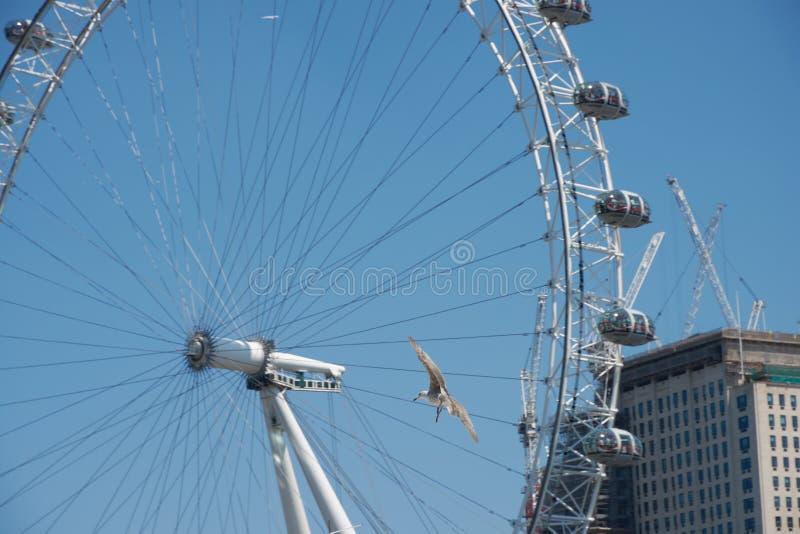 LONDRES - 26 juin 2018 : La mouette vole dans le fron images stock