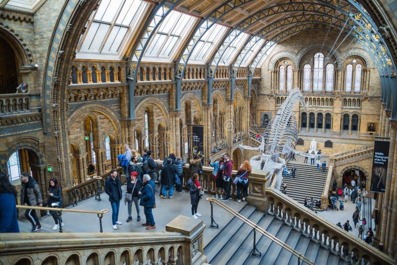 Londres Mus?e national d'histoire photographie stock libre de droits