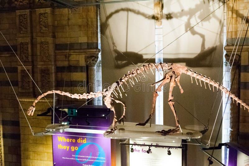 LONDRES, R-U - 27 JUILLET 2015 : Musée d'histoire naturelle - détails du Dinosaurus photographie stock libre de droits
