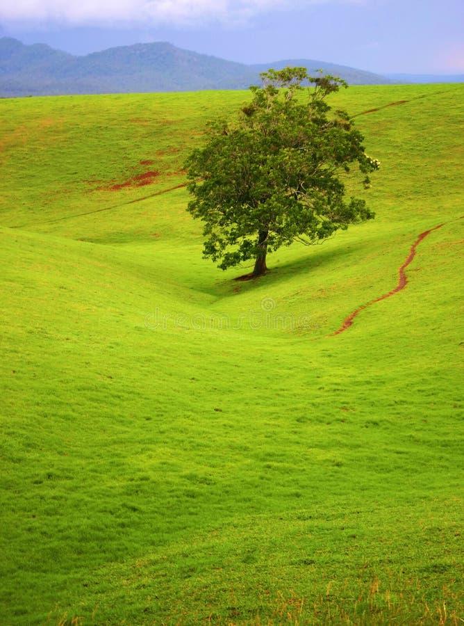 Download Lone överlevande fotografering för bildbyråer. Bild av trails - 75611