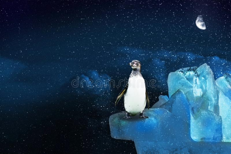 Lone arctic penguin stands on an icy mountain and looks into the starry sky in the moonlight, illustration stock illustration