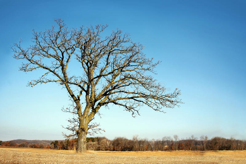 Lone Bare Branched Winter Tree in the Country stock photography