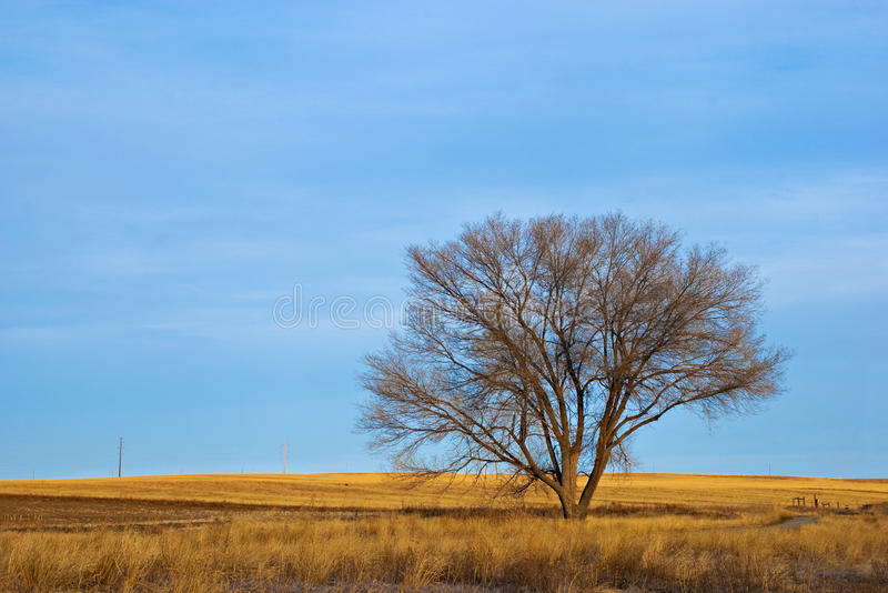 Download Lone Bare Tree In Winter On The Prairie Stock Photo - Image: 11907546