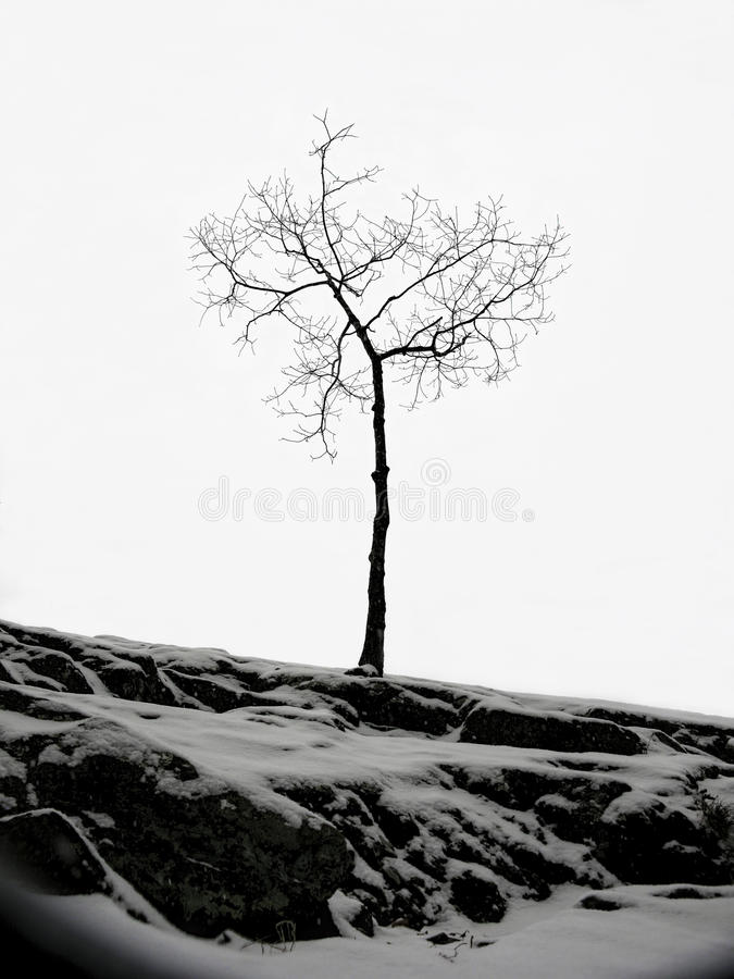 Lone Bare Tree in Winter stock photography