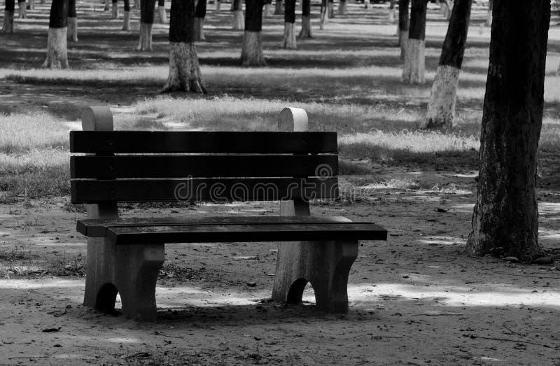 A lone bench in a garden stock photos