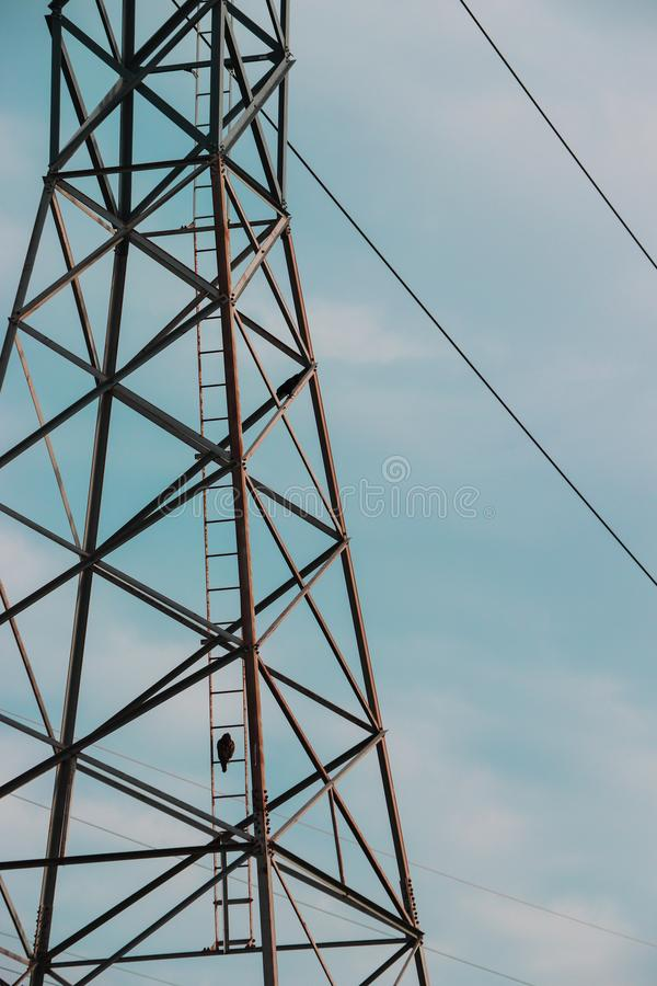 Lone bird sitting on a telephone pole. A lone bird perched on a ladder of a telephone pole on a cloudy day royalty free stock photos