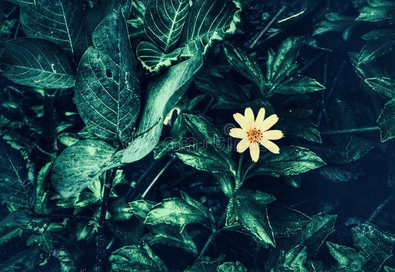 Lone blomma royaltyfri bild