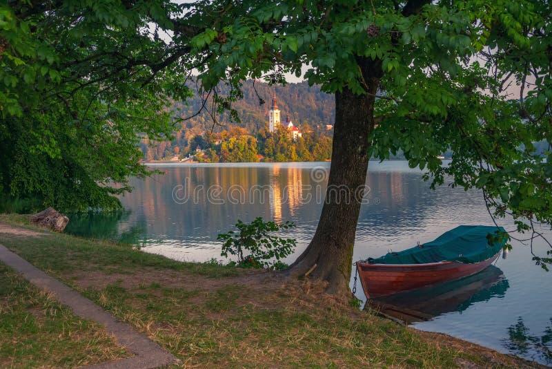 Lone boat moored near tree on Lake Bled, Slovenia at summer sunny morning royalty free stock photo