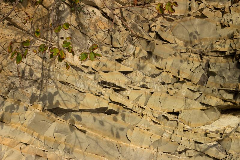 Little twig amid the rocks. royalty free stock photography