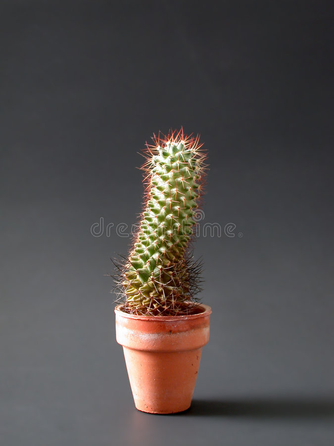 Download Lone Cactus stock photo. Image of pins, ouch, lone, cotta - 3406