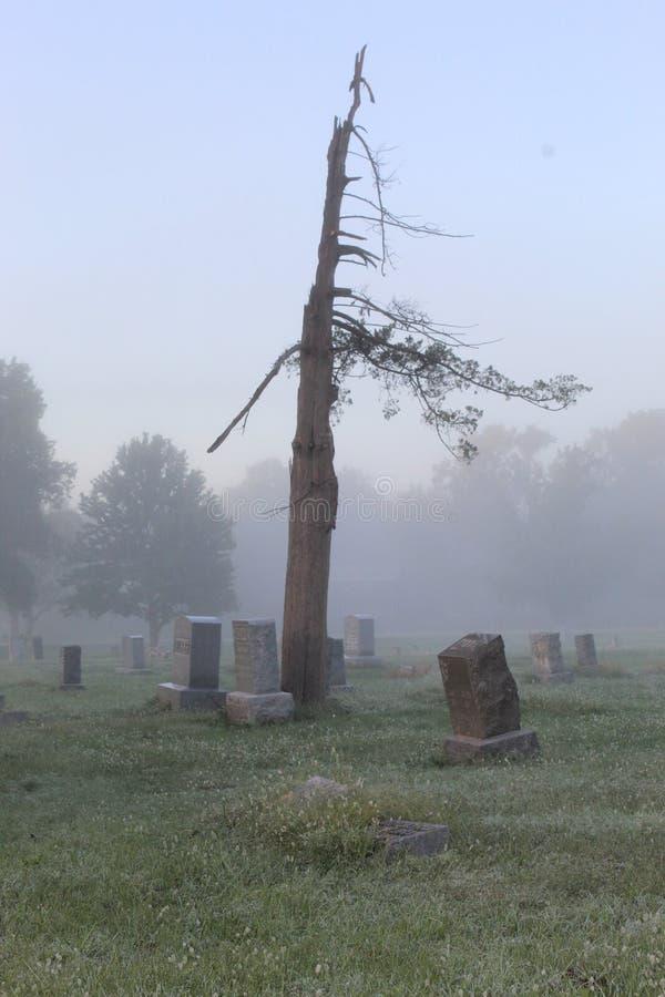 Lone Cedar Tree stock afbeelding