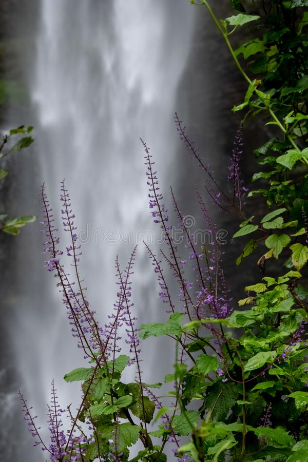 Lone Creek Falls with purple flowers in foreground, waterfalls in the Blyde River Canyon, Panorama Route near Sabie,South Africa royalty free stock photo