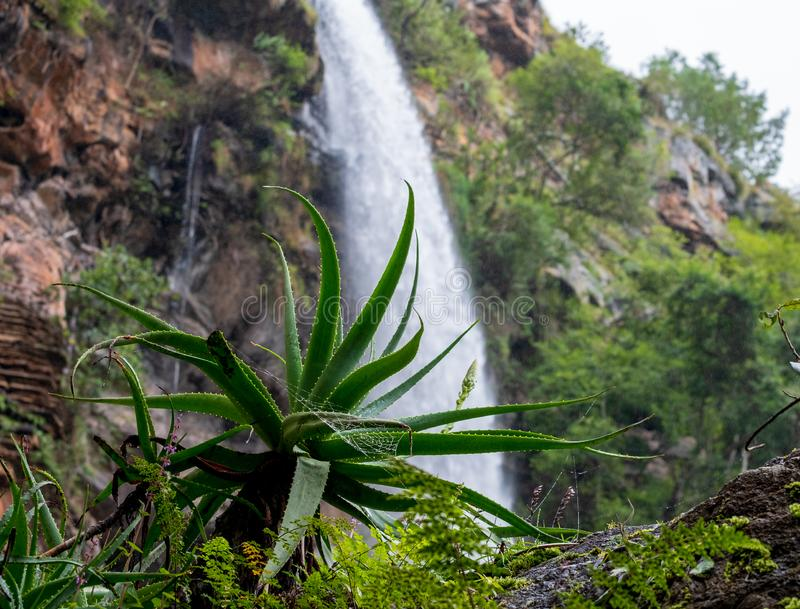 Lone Creek Falls, dramatic waterfalls in forested area in the Blyde River Canyon, Panorama Route near Sabie,South Africa royalty free stock photography