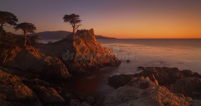 lone cypress arkivbilder