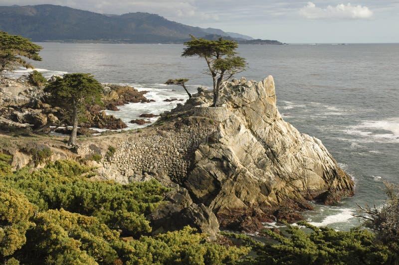 Lone Cypress, Carmel, CA royalty free stock photo