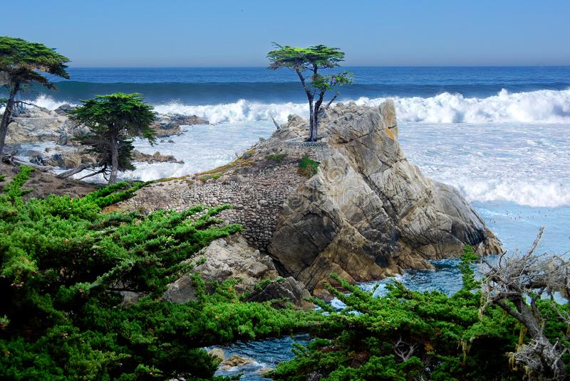 Lone Cypress with Pacific Ocean storm waves. Lone Cypress - 17 mile drive. This is the famous lone cypress in Pebble Beach. Taken on a sunny spring day. A storm royalty free stock photos
