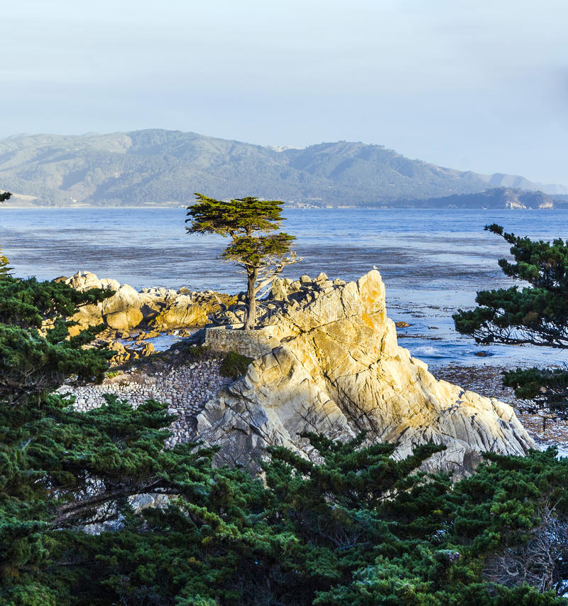 Lone Cypress at the 17-Miles-Drive in California. MONTEREY, CALIFORNIA - JUL 26, 2008: Lone Cypress tree view along famous 17 Mile Drive in Monterey. Sources royalty free stock photo