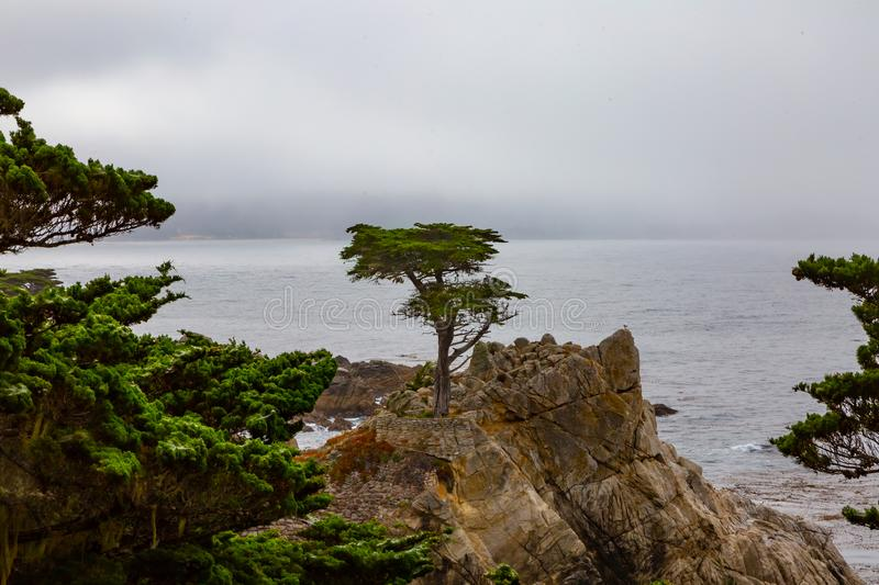 Lone Cypress at Monterey. The lone cypress tree on 17-mile drive in Monterey, California on a foggy morning stock images