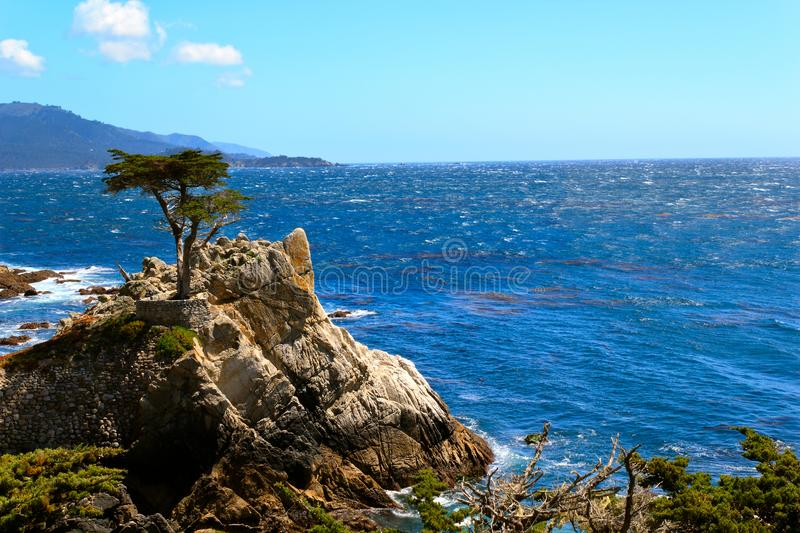 Lonely Cypress, Carmen and Monterey, California, Usa stock photography