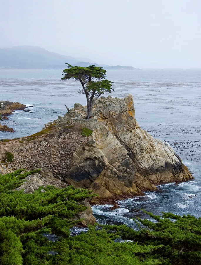 Lone Cypress Tree. In Monterey California stock images