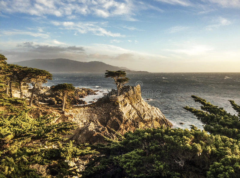 The Lone Cyprus. The famous Lone Cyprus also used as the logo for Pebble Beach Golf Course. This area is located in the famous 17-Mile Drive royalty free stock images
