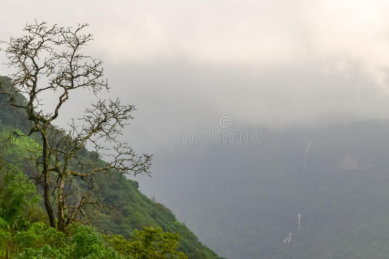 Lone dead tree in green tropical forest during rainy weather in Matheran Maharashtra. Misty green grass covered mountains of Matheran a hill station nestled in stock photo