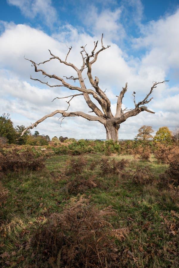 Lone Dead Tree fotografia stock libera da diritti