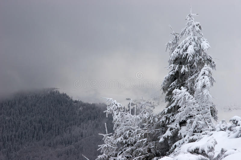 Download Lone Fir Tree With Snow Clouds In Background Stock Image - Image: 12141157