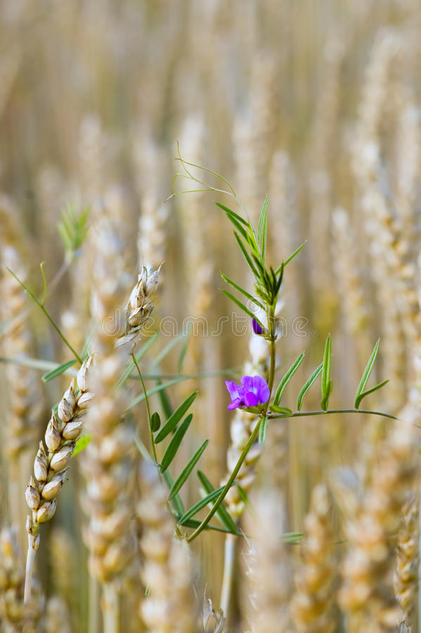 Download Lone flower stock image. Image of plants, different, field - 18098907