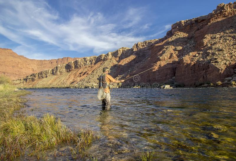 Lone Fly Fisher on the Colorado river near Lees Ferr, Arizona stock image