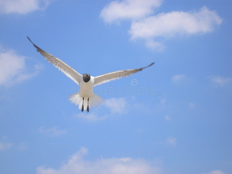 Download Lone Gull, Part Two stock image. Image of gull, peaceful - 200809