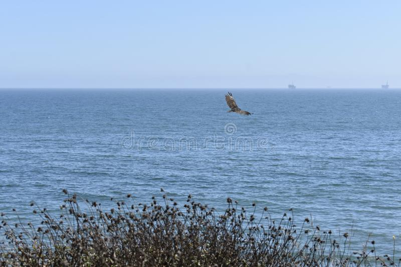 A lone hawk gliding over the southern California coast. Hawks are birds of prey with many varieties, and so are widely distributed and vary in size and diet stock photos