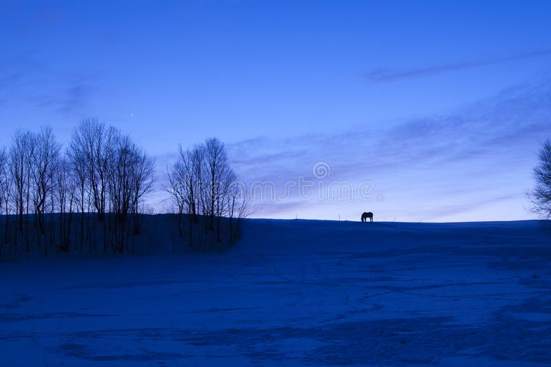 Lone horse on snow covered ridge at dusk. In Vermont, USA stock photo