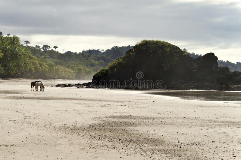 Lone Horses Beach Front, Costa Rica royalty free stock photography