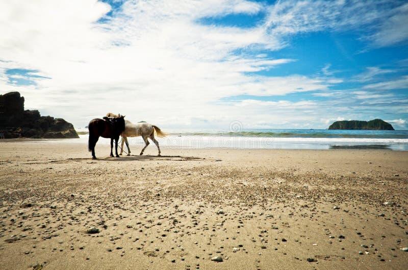 Lone Horses Beach Shore, Costa Rica stock photo