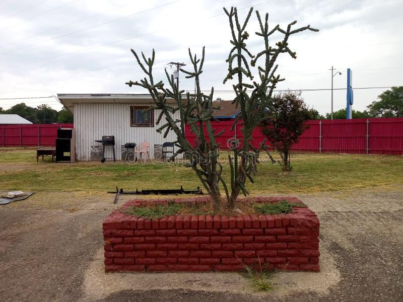 lone kaktus arkivfoto