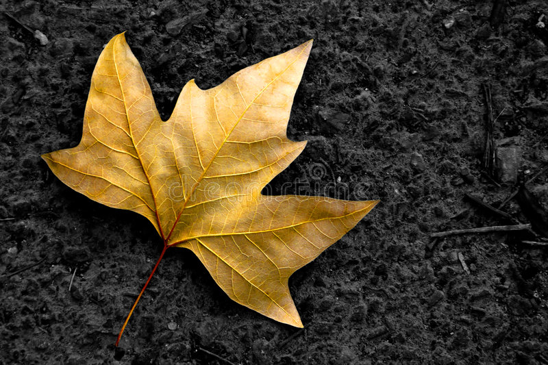 Lone Leaf stock images