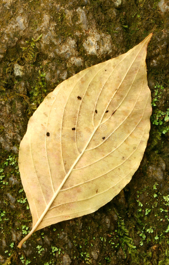 Free Lone Leaf Stock Photo - 774800