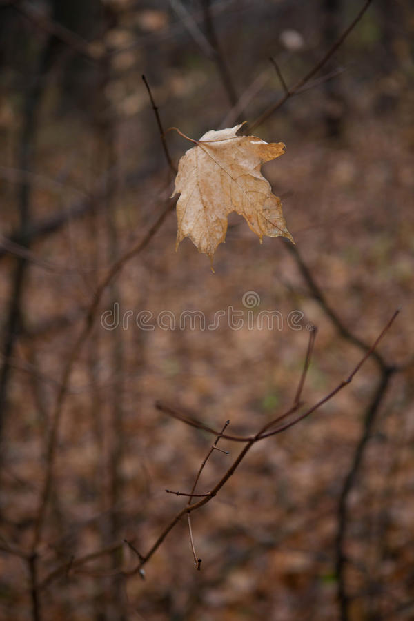 Lone leaf stock photography