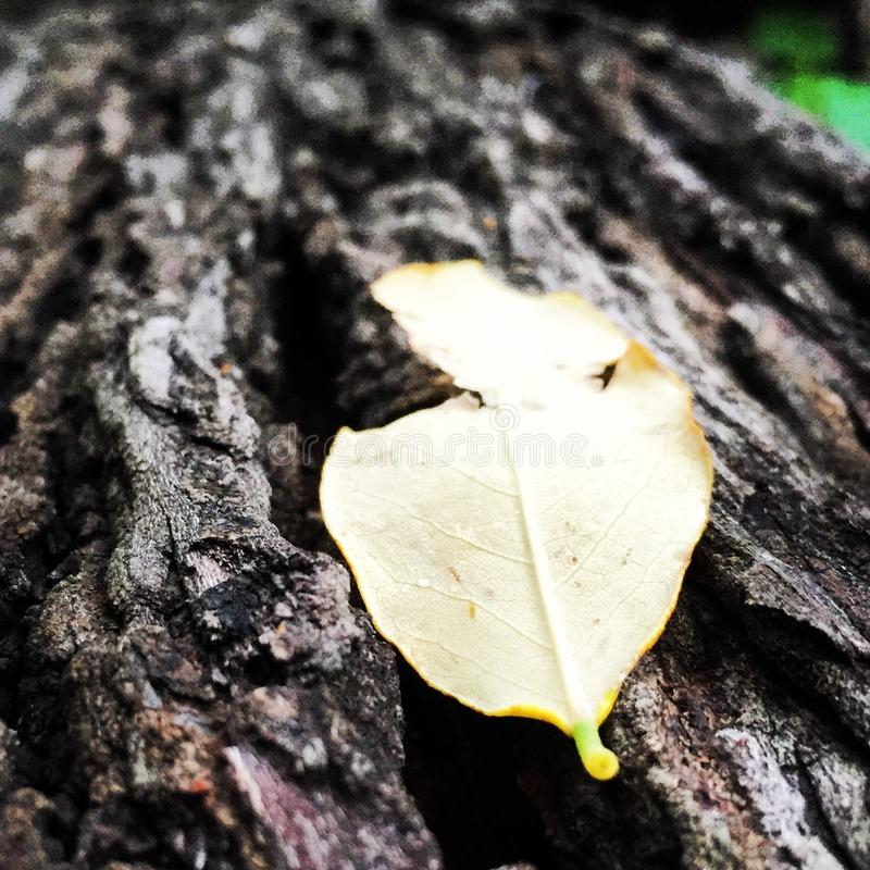 The lone leaf in the woods. royalty free stock photos