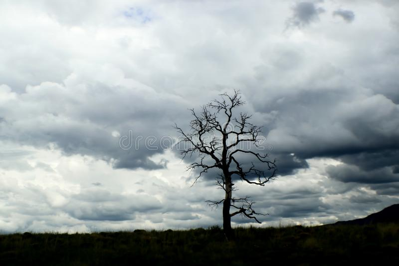 Lone leafless tree on horizon with dramatic turbulent storm clouds in the background royalty free stock image