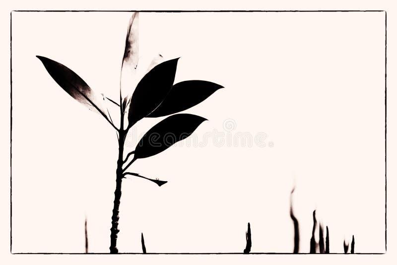 lone mangrove arkivbilder