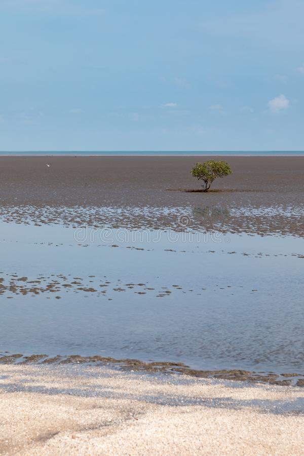 Lone mangrove on mudflat at low tide with blue sky. Darwin, Northern Territory, Australia royalty free stock photo