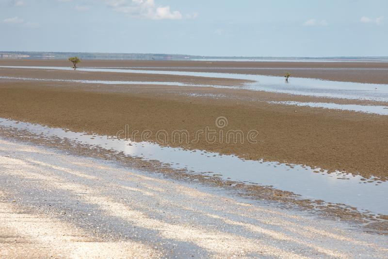 Lone mangrove on mudflat at low tide with blue sky. Darwin, Northern Territory, Australia royalty free stock images