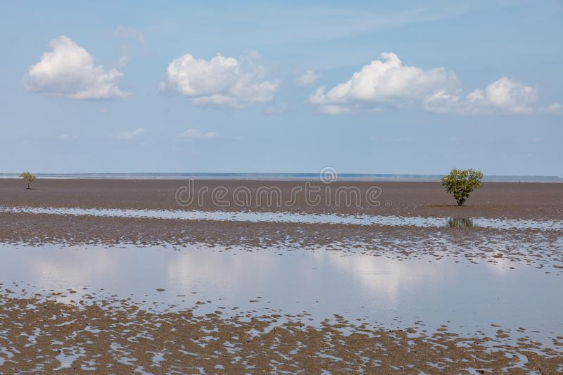 Lone mangrove on mudflat at low tide with blue sky. Darwin, Northern Territory, Australia stock images