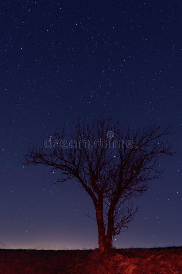 Lone naked tree against starry night sky stock photos