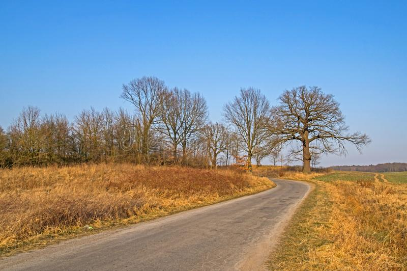 A lone oak at a country road. Old, large, stately oak. Other smaller trees in the background. It grows along a narrow, rural road. It is early spring. There are stock photos