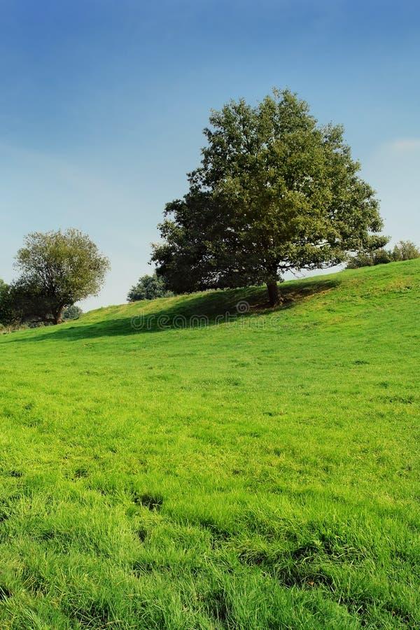 Lone Oak Tree On Fresh Grassland Slope. Royalty Free Stock Photography